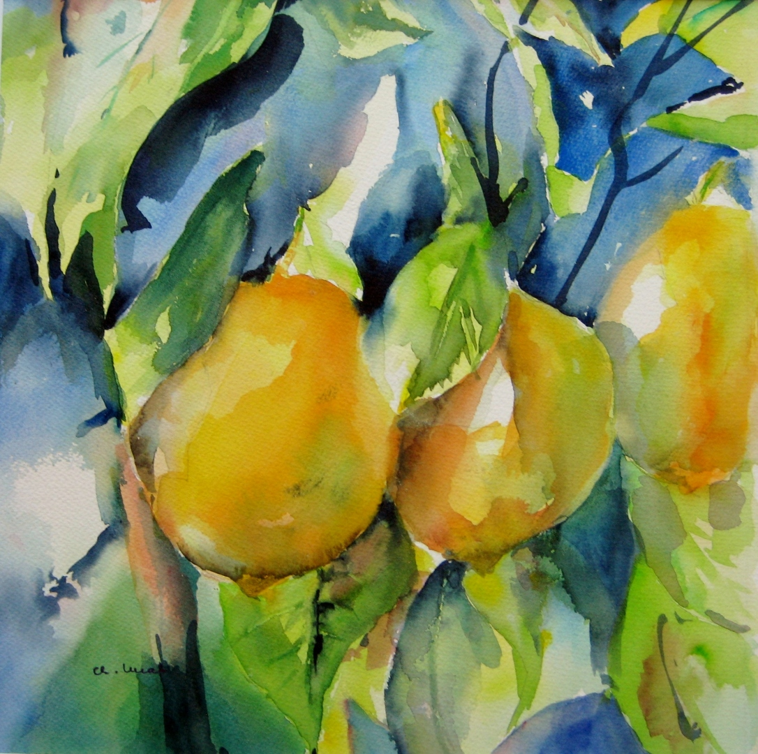 Zitronen am Strauch