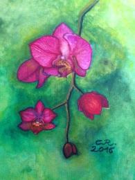 """Pinke Orchidee"""